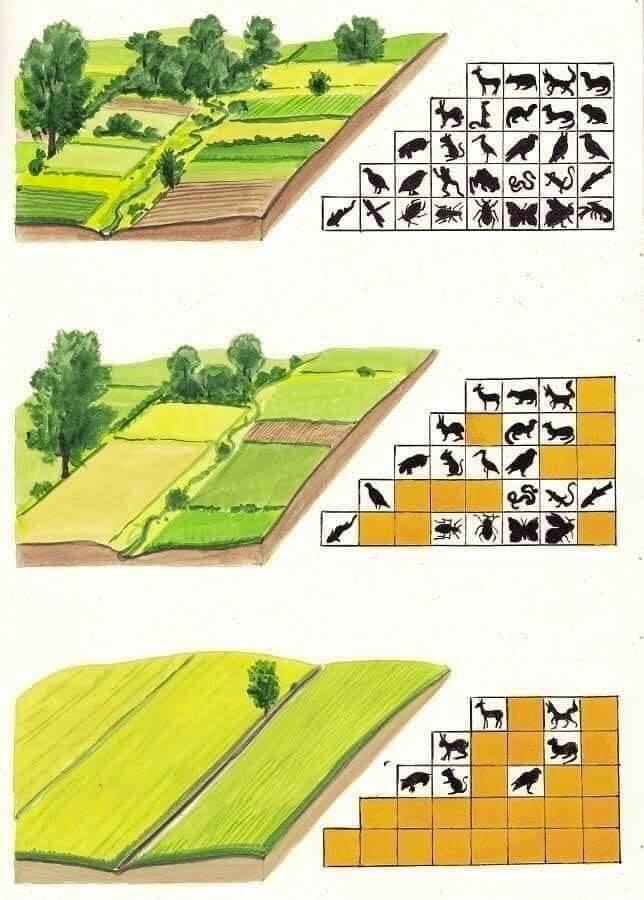 Biodiversité_2e golf Pulnoy_4e image_sept2019